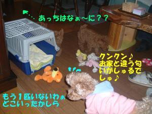 20060220181430.jpg