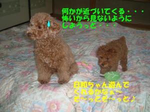 20060308190938.jpg