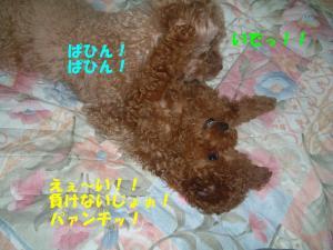 20060308192659.jpg