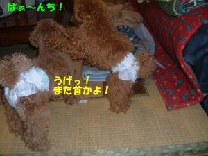 20060311094639.jpg