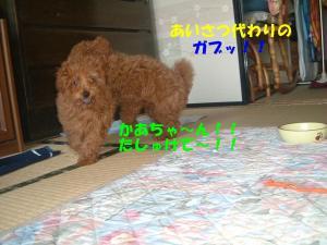 20060325191141.jpg