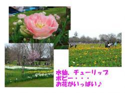 20070403132300.jpg