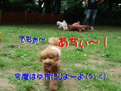 20070809121520.jpg