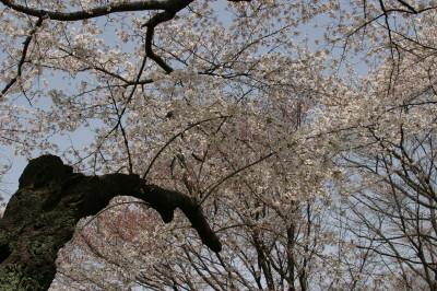 20060401_0015.jpg
