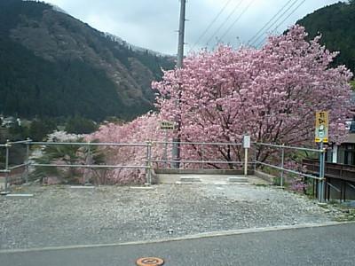 20080412IMG_0006.jpg