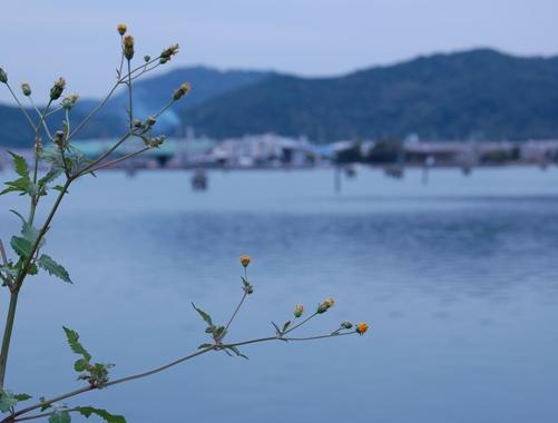 秋っぽい花と海
