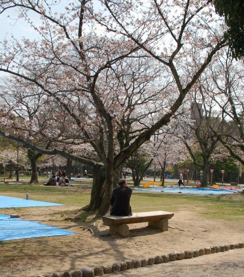 2010桜_徳島城址002