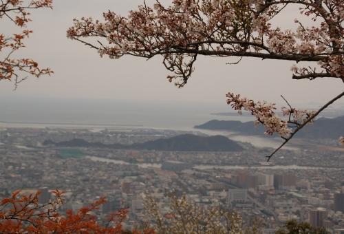 2010桜_眉山