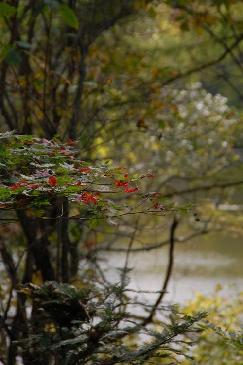 紅葉の始まり_001