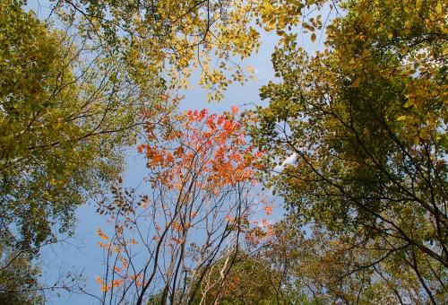 紅葉の始まり_002