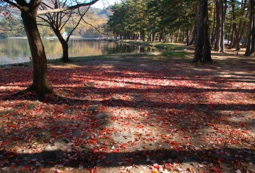 木崎湖_赤い絨毯