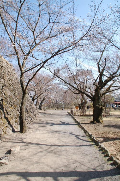 懐古園_桜
