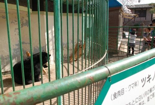 小諸市動物園_リキ