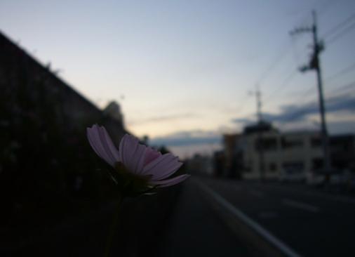 秋の夕暮れ_01