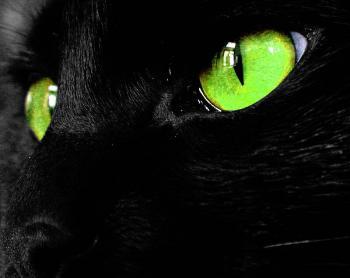 cat169.jpg