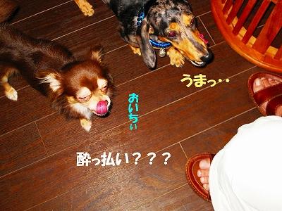 IMG_1024.jpg