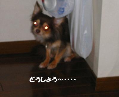 h-IMG_0962.jpg