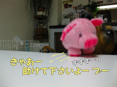 h-IMG_1225.jpg