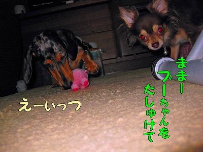 h-IMG_1229.jpg