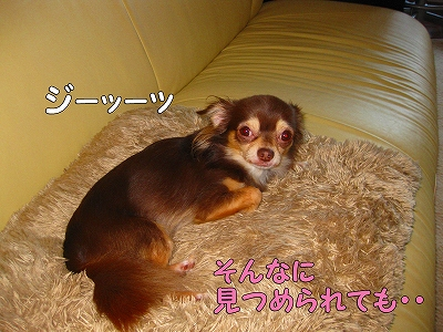 h-IMG_1236.jpg