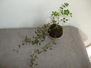 BLOG2008_0922三日月豆0027