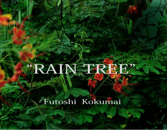 ex_08_rain_tree_1.jpg
