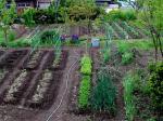 長野_家庭菜園