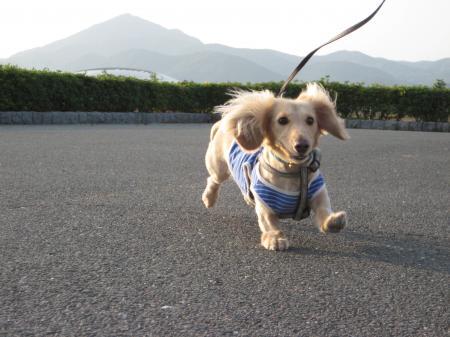 散歩_090531