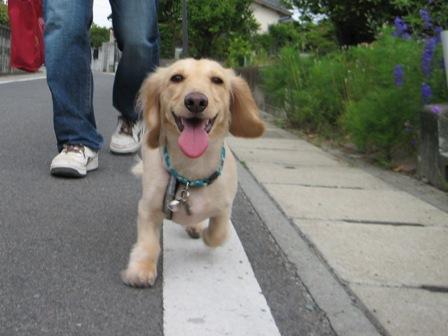 ママとパパとで楽しい散歩_090606