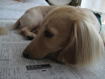 ②新聞大好き