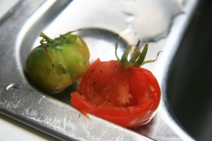 無残なトマト