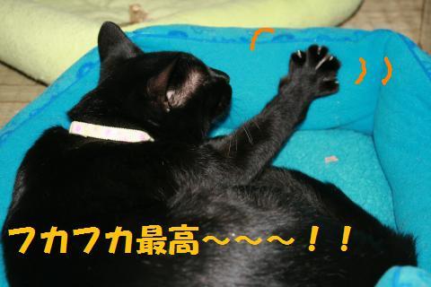 001_convert_20100209222538.jpg