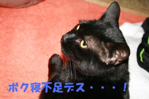 001_convert_20100218233839.jpg