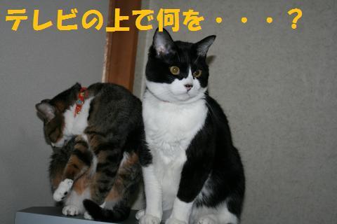 001_convert_20100403184219.jpg