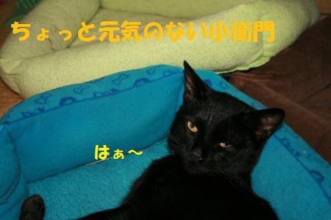 001_convert_20100417234221.jpg