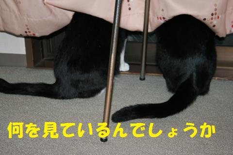 001_convert_20100517235650.jpg