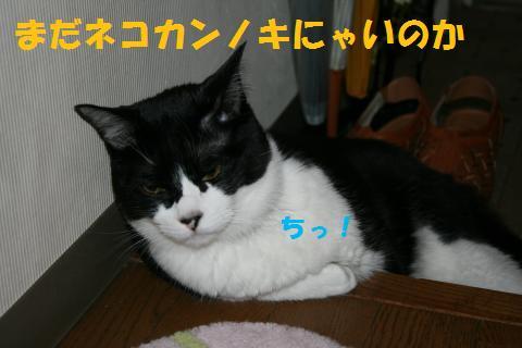 001_convert_20100613170111.jpg
