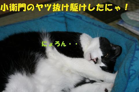 001_convert_20101003203946.jpg