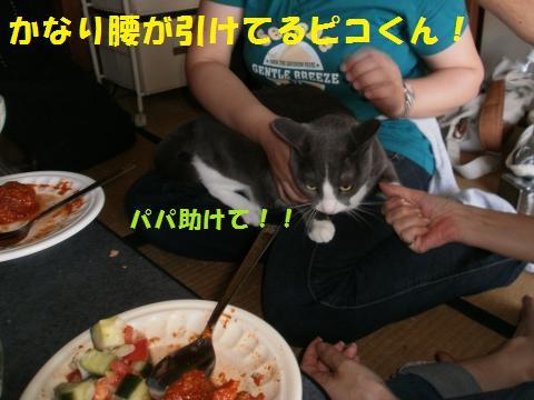 001_convert_20101013191056.jpg