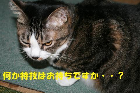 001_convert_20101024133649.jpg
