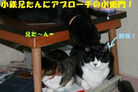 001_convert_20110115225556.jpg