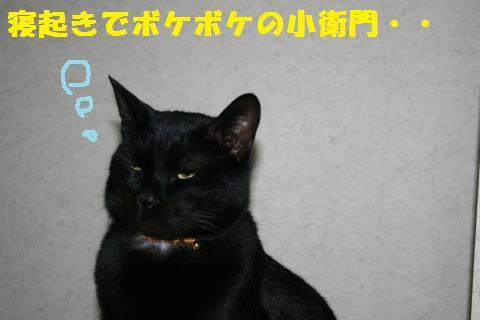 001_convert_20110120221617.jpg