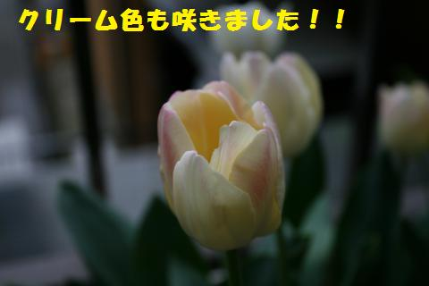 001_convert_20110421191539.jpg