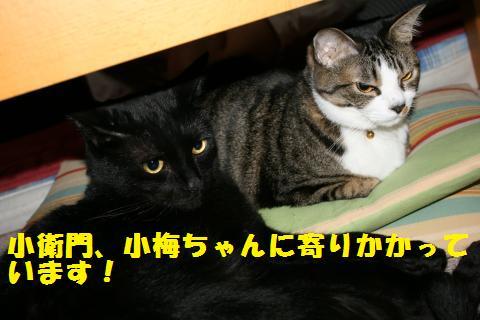 001_convert_20110427234904.jpg