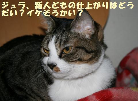 001_convert_20110521233434.jpg