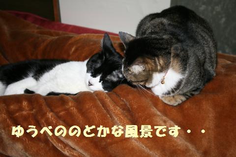 001_convert_20110602220356.jpg