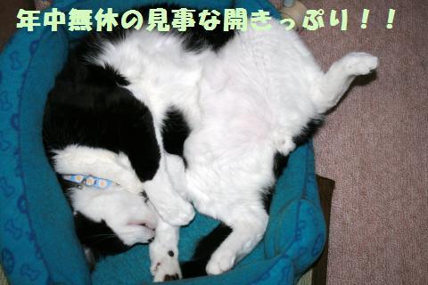 001_convert_20110815224133.jpg