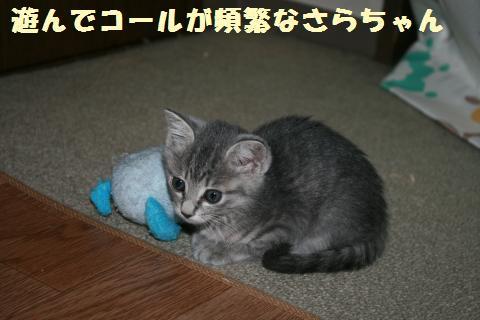 001_convert_20111027182851.jpg