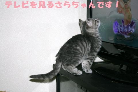 001_convert_20111117194424.jpg