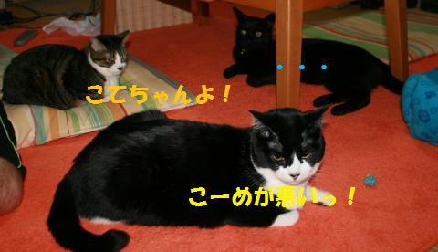 002_convert_20100302232640.jpg